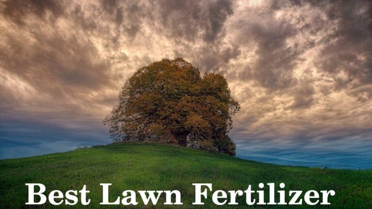 Best Lawn Fertilizers for spring