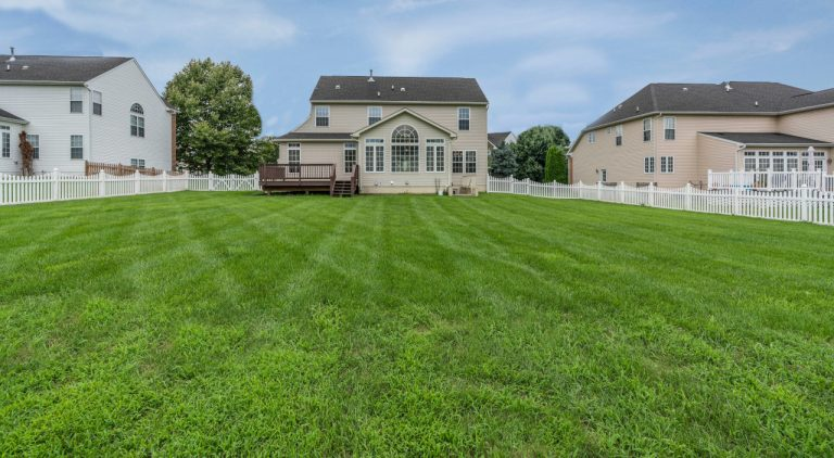 How to renovate lawn – 10 simple steps