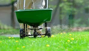 Beginners Guide to Lawn Fertilizer
