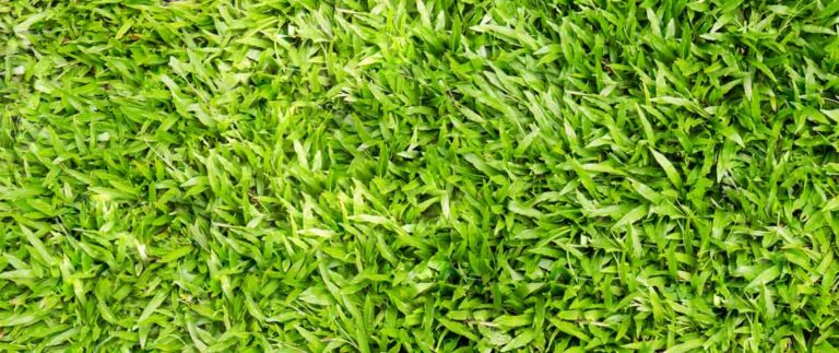 Best fertilizer for centipede grass – Experts opinion