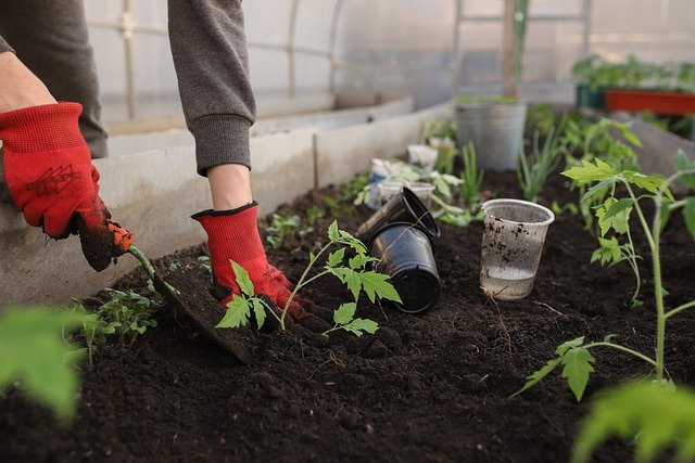 How to avoid over-fertilizing your lawn