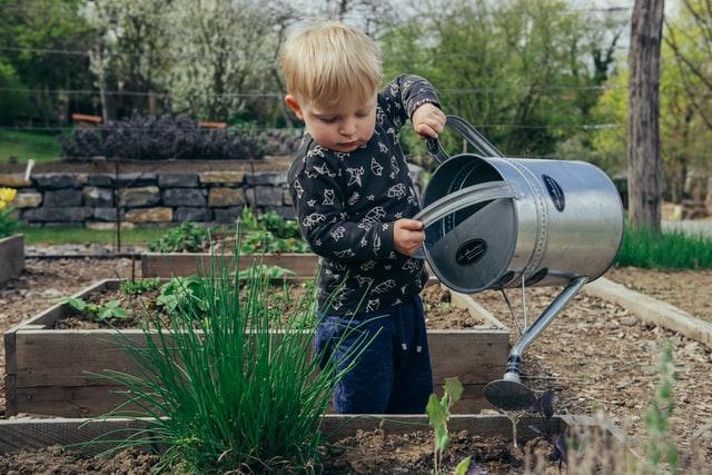 How long should fertilizer be down before it rains?