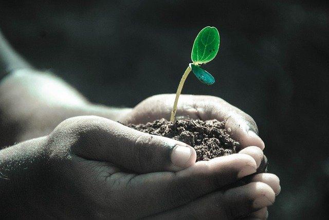 Is 15-15-15 Fertilizer Good for Lawns?