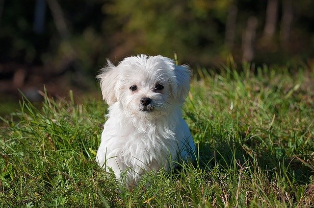 Is grass fertilizer safe for dogs?