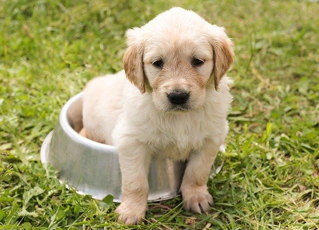 Is scotts fertilizer safe for dogs?