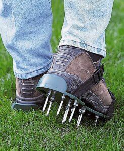 winter care for lawn