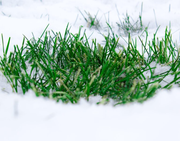 How to lawn care in winter