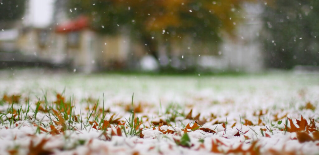 how-to-lawncare-in-winter
